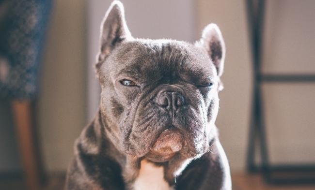 colorado emotional support animal laws - esa doctors