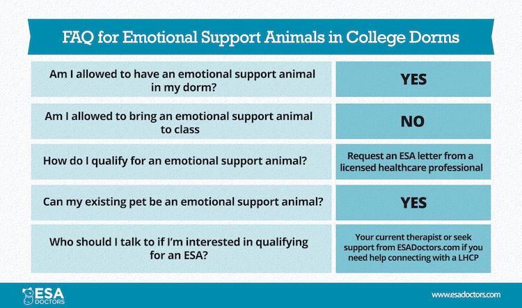 Emotional Support Animals In College Dorms Esa Doctors